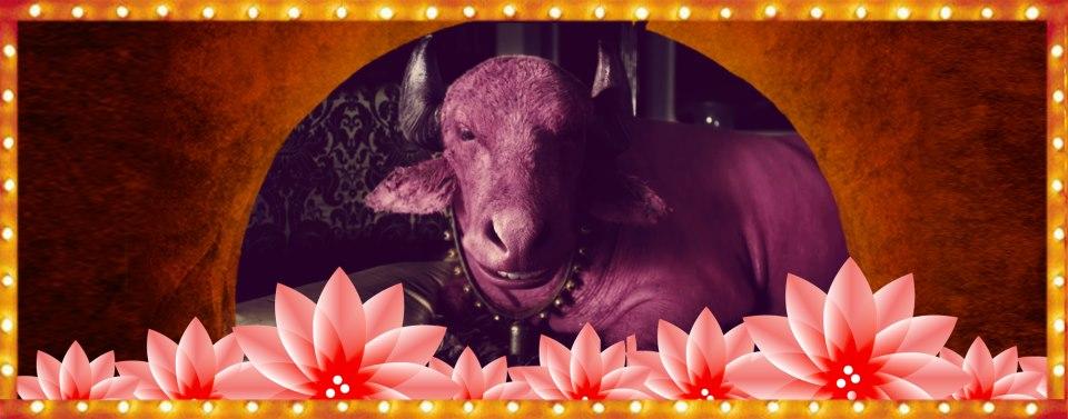 gulaabo Gulabo    Imran Khan's new bright pink 'gaddi'