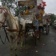 13jul Issaq Sawaari02 185x185 Issaq takes fans for fun filled 'Baggi' rides!!